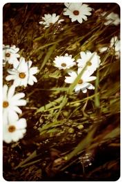 west coast flowers-3